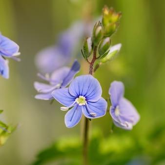 Zamknij się małe kwiaty na trawie