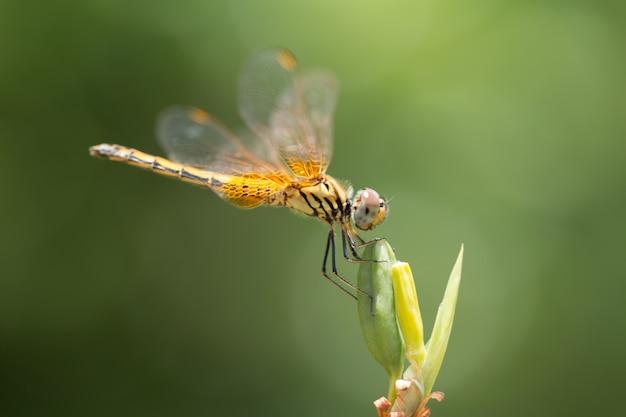 Zamknij się małe piękne ważki, są najlepszym mordercą komarów w przyrodzie