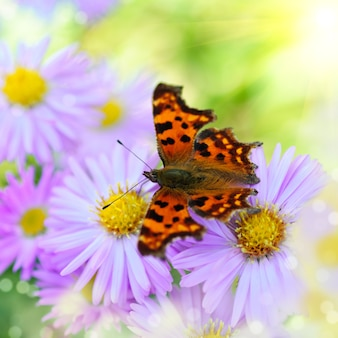 Zamknij się motyl na kwiatku