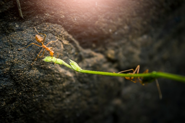 Zamknij się mrówki