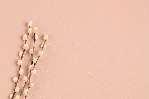 Zamknij się na gałązkach wierzby na różowym tle