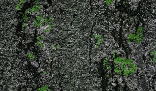 Zamknij się na korze drzewa z zielonym mchem