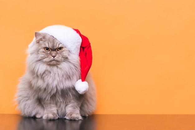 Zamknij się na kota w boże narodzenie kapelusz na białym tle