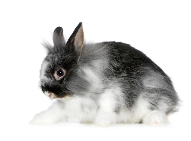 Zamknij się na królika na białym tle