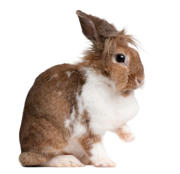Zamknij się na ładny królik na białym tle