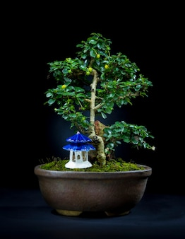 Zamknij się na pięknym drzewku bonsai w ceramicznej misce