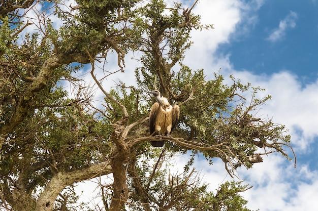 Zamknij się na sępie na zielonym drzewie