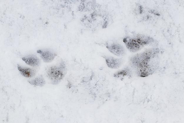 Zamknij się na ślady łap psa w śniegu
