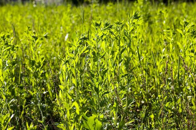 Zamknij się na zielonej trawie