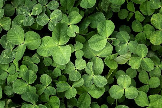 Zamknij się na zielonych liściach w przyrodzie