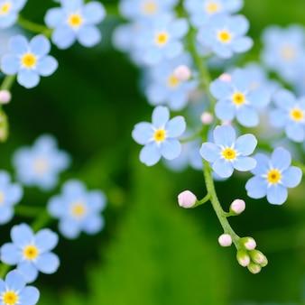 Zamknij Się Niebieskie Małe Kwiaty Premium Zdjęcia