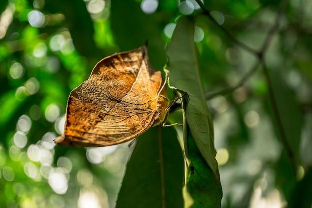 Zamknij się obraz motyla na liściu natury