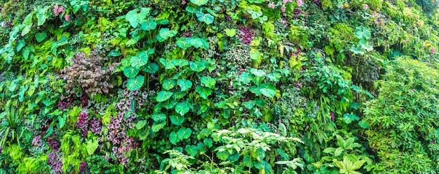 Zamknij się ogród z tropikalnych zielonych liści i kwiatów