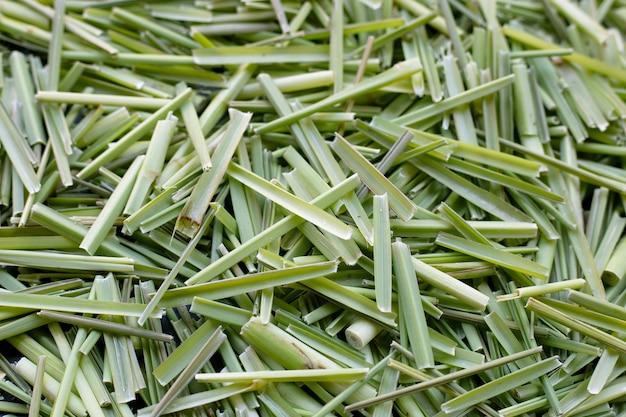 Zamknij się organiczna trawa cytrynowa. liście cięte
