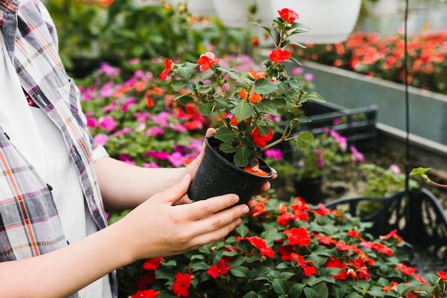 Zamknij się osoba posiadająca roślinę