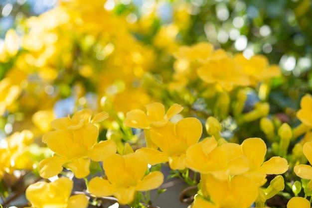 Zamknij się piękne żółte kwiaty z zielonymi liśćmi