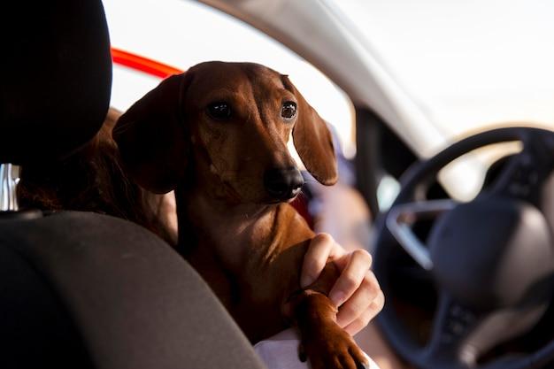 Zamknij się podróżnik trzymający psa