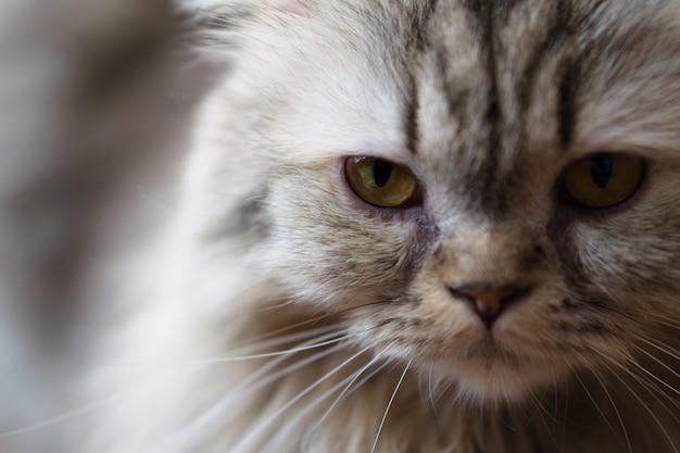 Zamknij się portret kota. selektywne skupienie na kocim oku.