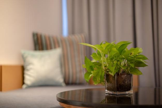 Zamknij się roślin wewnątrz doniczki szklanej z na stole