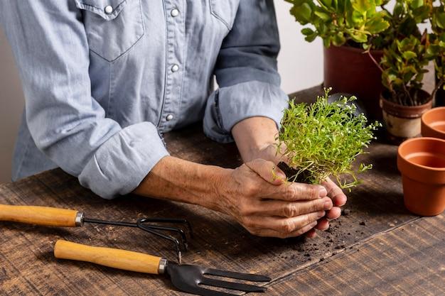 Zamknij się sadzenie kwiatów w doniczce