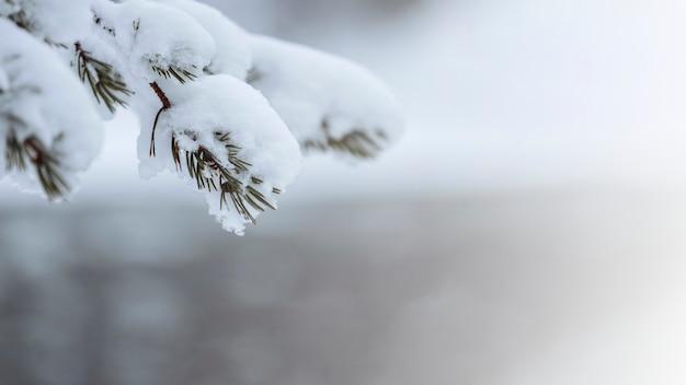 Zamknij się śnieżnych drzew w parku narodowym riisitunturi, finlandia