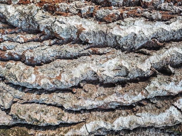 Zamknij się starej tekstury drewna, powierzchni kory drzewa