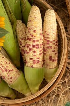 Zamknij się świeżej organicznej słodkiej kukurydzy w koszyku