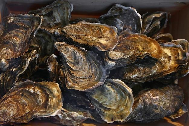 Zamknij się świeży połów surowych ostryg na wystawie detalicznej rynku rybaków, wysoki kąt widzenia