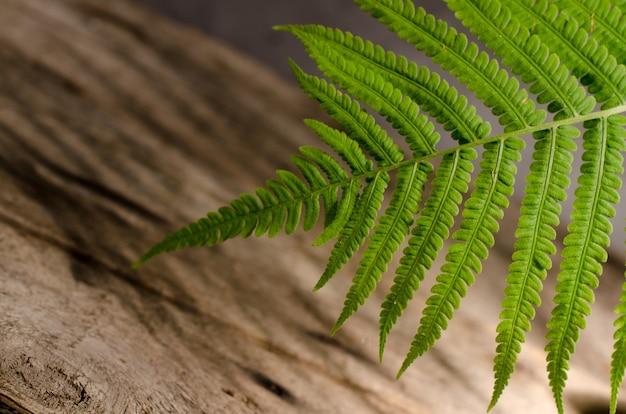 Zamknij się świeży zielony liść paproci na drewnianym tle. wiosna tło botaniczne.