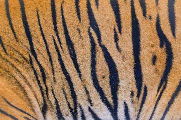 Zamknij się tekstury skóry tygrysa
