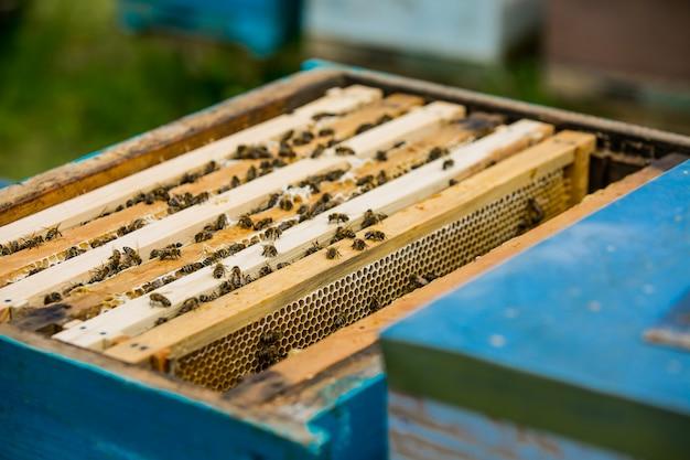 Zamknij się widok pszczół pracujących na komórkach miodu. pracujące pszczoły na strukturze plastra miodu. pszczoły na plaster miodu. ramki ula pszczół