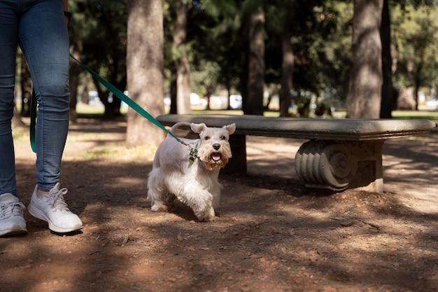 Zamknij się właściciel spacerujący pies