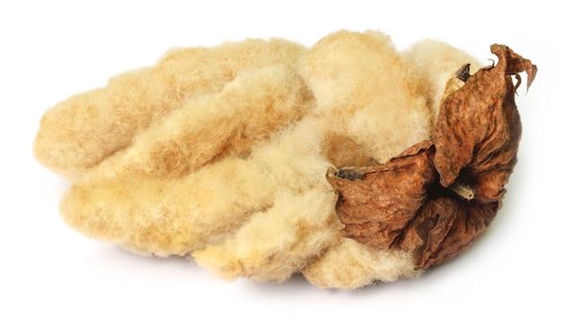 Zamknij się z bawełny organicznej na białym tle