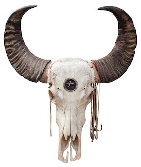 Zamknij się z czaszką buffalo na białym tle
