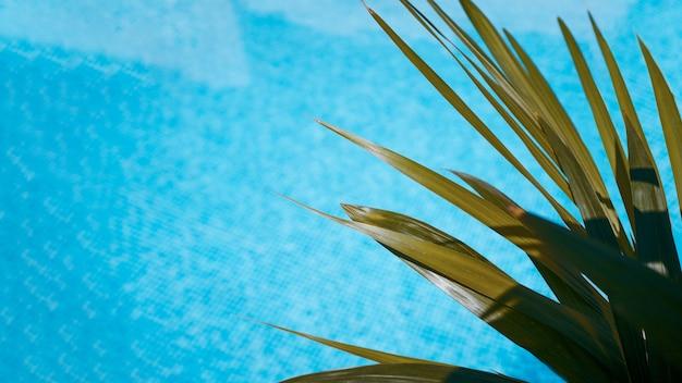 Zamknij się z liści ananasa na powierzchni wody basenu. tło. koncepcja lato.