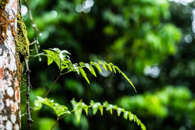 Zamknij się z liści paproci na drzewie