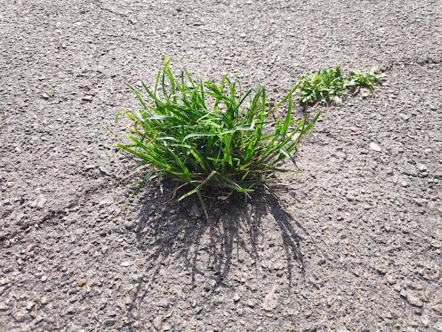 Zamknij się z małych zielonych roślin, które zaczynają rosnąć przez asfalt na wiosnę