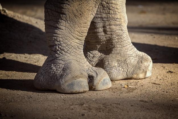 Zamknij się z nosorożcem w zoo w barcelonie w hiszpanii