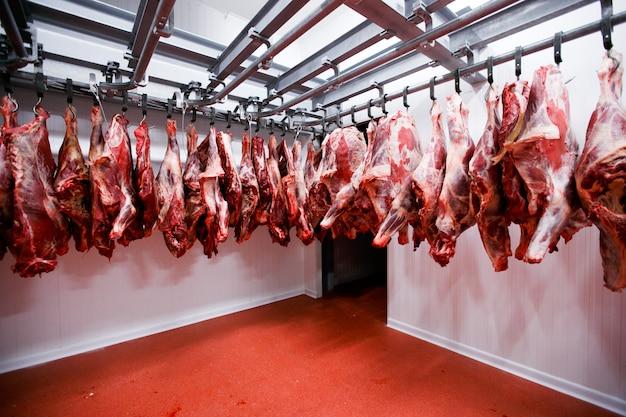 Zamknij się z pół kawałków krowy świeżo zawieszonych i ułożonych w rzędzie w dużej lodówce w przemyśle mięsnym lodówki.