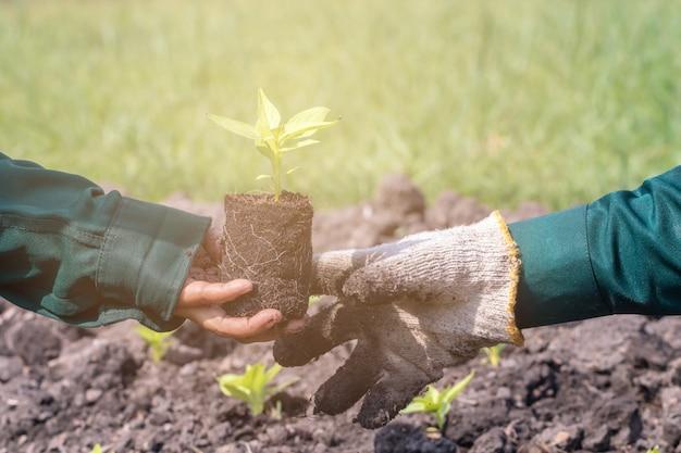 Zamknij się z selektywnej skupić się na sadzonki roślin