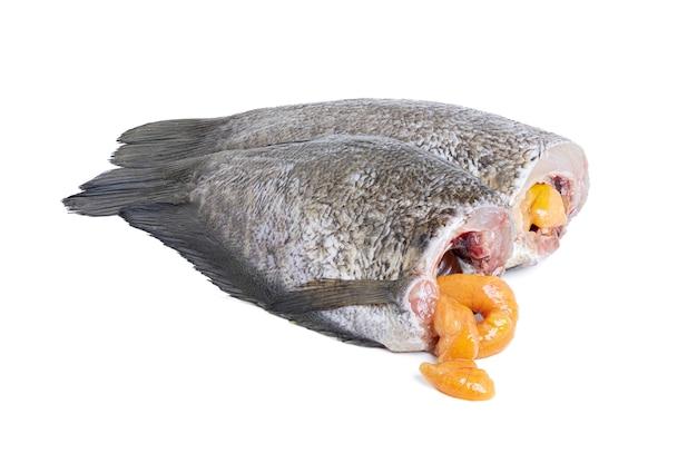 Zamknij się z suszonych ryb gourami skóry węża, pla salid (trichogaster pectoralis) na białym tle na białej przestrzeni ze ścieżką przycinającą.