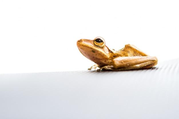 Zamknij się żaby