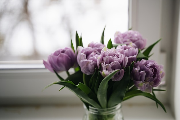 Zamknij się zdjęcie fioletowe tulipany. koncepcja wiosny.