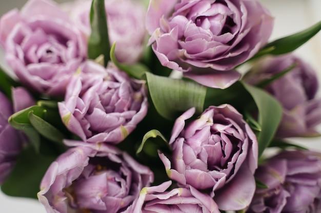 Zamknij Się Zdjęcie Fioletowe Tulipany. Koncepcja Wiosny. Premium Zdjęcia