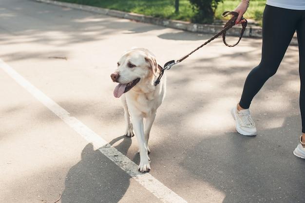 Zamknij się zdjęcie golden retriever idącego w pobliżu swojego właściciela w parku