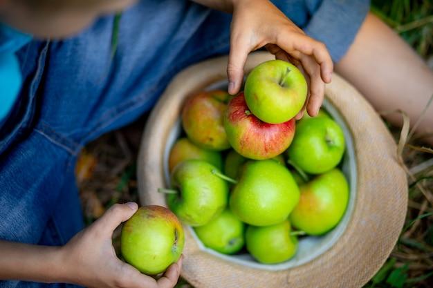 Zamknij się zielone i czerwone jabłka w kapeluszu na zielonej trawie i ręce dziecka.