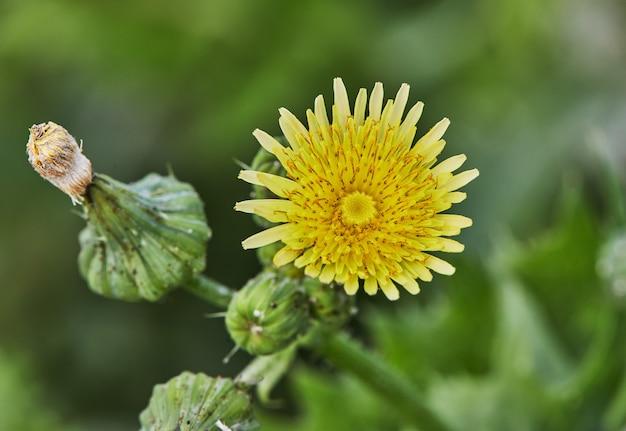 Zamknij się żółty kwiat na tle farmy