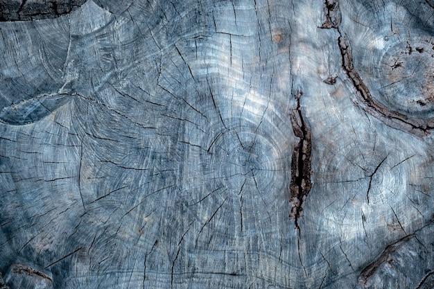 Zamknij stare drzewo z pęknięciami