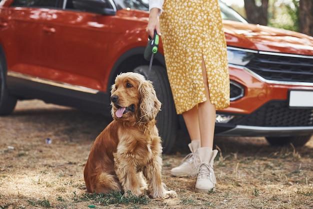 Zamknij widok kobiety z psem na zewnątrz w lesie mają dobry czas.