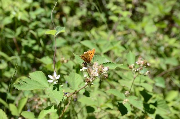 Zamknij widok motyla na liściu
